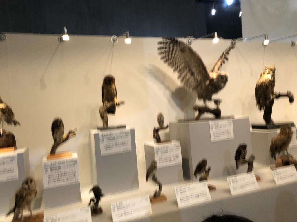 大地のハンター展の展示
