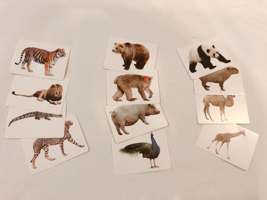 ダイソーのものしりカードの遊び方